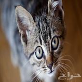 حصلت قطة ... اللي مضيع له قطه يدخل