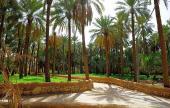 مزارع واستراحة وغنم سوداني