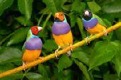 طيور مختلفة للبيع باسعار ممتازة