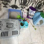 قطه شيرازيه للبيع عمرها ثلاثة اشهر