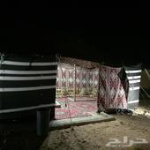 مخيم شتاوي للايجار بالثمامه