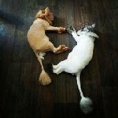 حلاقة وترويش القطط