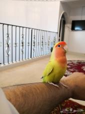 طائر جميل