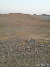 أرض السيل الصغير (الحامدية)
