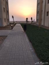 شقة غرفة وصالة المدينة الاقتصادية حي الشروق