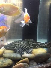 حوض سمك كبيرماركة JEBO مع فلتر 1000ريال