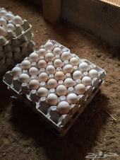 بيض بلدي طازج للأكل و للفقاسة بالرياض