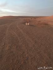 ارض مخطط شرق الرياض مساحة 1639