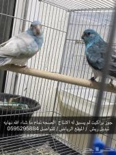 مجموعه طيور للبيع يفضل البيع جمله
