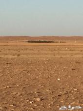 ارض زراعية للبيع شمال الشيحيه