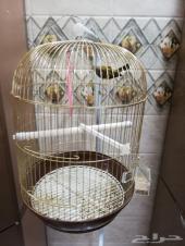 الطائر المميز البندوق