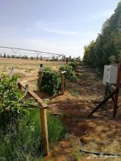 مزرعة في دقلة للبيع