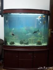 للبيع حوض سمك كبير جدا اصلي وفخم جدا