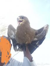 ياهل الخبره هذا الطير ويش هو