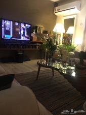 شقة فخمة ومميزة بحي الأمير عبدالمجيد الجنوبي