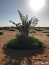 مزرعة للبيع في محافظة الغاط من المالك مباشرة