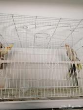 طيور كروان للبيع