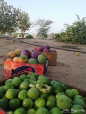 ثلاث مزارع مانجو وليمون بناوان