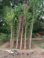 أشجار وشتلات باسعار مناسبة حدائق المنازل و ال