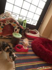 ثلاث قطط للبيع