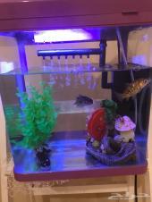 حوض سمك جديد
