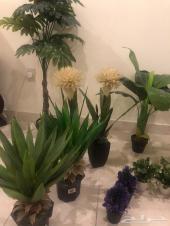 نباتات للبيع
