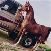 من يشتري اشاص وع الحصان  الثين (10)الف
