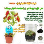 نبتة آكلة الحشرات