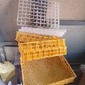 فقاسة المحمدية 352 بيضه