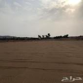 أرض زراعية للبيع في الغولاء مع خط كهرباء