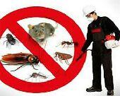 مكافحة جميع انواع الحشرات  المدينة المنورة