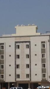 شقة 4 غرف للبيع بصك ب 360 ألف بالشفا