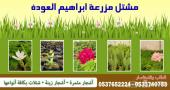 شتلات زراعية للبيع