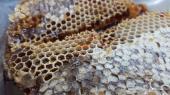 العسل الاسود السمر الجبلي والعسل المجرى وعسل السمر والسدر الجبلي صافي وعلى الضمان إنتاج جديد وعسل ا