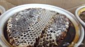 عسل الطيبين مناحل الجنوب وعلى الفحص والمختبر
