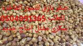 سكري القصيم الفاخر  مفتل جمله ومفرق جديد