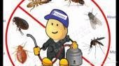 شركة رش مبيد جميع أنواع الحشرات بالرياض