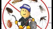 شركة رش مبيد ومكافحة الحشرات بالدمام
