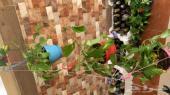 تصفية مشتل نباتات داخليه و خارجيه