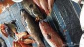 سمك للبيع ايام الاسبوع. احجز طلبك