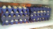 بيض بلدي للأكل بالتوصيل داخل العزيزيه مجاني