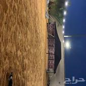 مخيم في شاليه