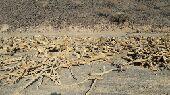 حطب سمر للبيع