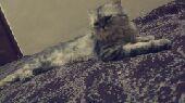 مكه - سلام عليكم قطط