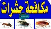 شركة مكافحة الحشرات. رش مبيد للحشرات