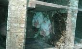 حمام فرنسي جامبو للبيع