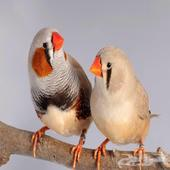 مين عنده طيور لتبني او للبيع بسعر طيب