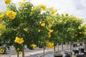15 صنف لبذور أشجار برية وأشجار ظل وزهور مع ..
