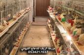 دجاج فيومي-أمهات-بشاير-صوص-بيض-عروض خاصة.
