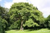 بذور أشجار ونباتات صحراوية وأشجار ظل جميلة